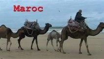 Voyage photo au maroc  avec ForMaroc- Riad Zahra -Essaouira -Maroc