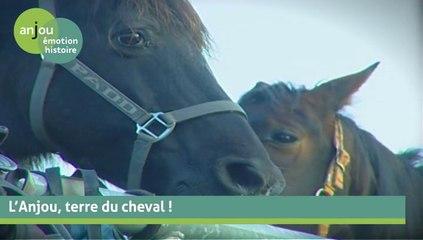 L'Anjou, terre du cheval