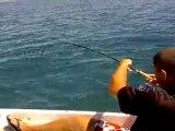 Pêche d'un Billard petit mais vraiment costaud
