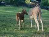 Zedonk foal shows off racing stripes