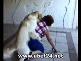 Hund rammelt Frau ab *funny lustig witzig*