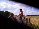 Prairie strawmaid,jument PAINT HORSE
