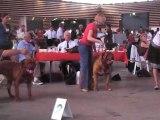 spéciale lyon 2010 dogues de bordeaux 2