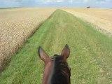 Balade dans les champs