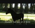 Delphy_Nos 3 bêtes - 2