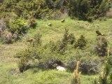 VACANCES - 20/06/2010 - Vautours à Os de Civis