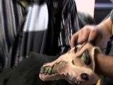 Repulsive Protrusion - DVD Bonus Repulsive Protrusion (Anglais)
