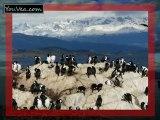 Ushuaia Fin del mundo Argentine by Nevisto