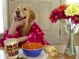 video rigolo d'un chien