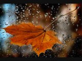 Taner Yüncüoğlu – Yağmur