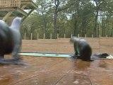 Les otaries du Zoo d'Amneville
