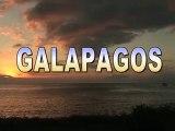 Mes premiers pas aux Galapagos : otaries et iguanes marins