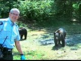 Cannabis growers 'used black bears as guards'