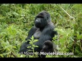 Gorillas in the Mist; The Story of Dian Fossey (1988) Part 1