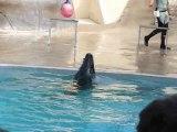 Spectacle d'otaries au zoo de Pont Scorff du 19/08/2010