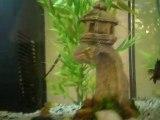 1er jour et 1er aquarium