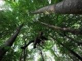 pendule darbre en arbre