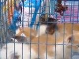 La mode canine Made in China