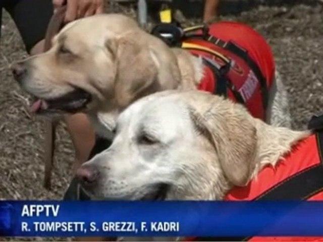 Perros Adiestrados Salvavidas mov | Godialy.com