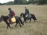 Galop dans un chaume Les poneys de Sophie 77