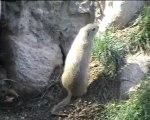 Parc-animalier des pyrénées_les animaux en balade