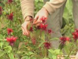 Herboriste aux Jardins de Bernadette (Vosges - Lorraine)