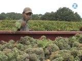 Languedoc-Roussillon : 1er vignoble bio de France