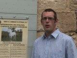 Approbation des étalons des chevaux de Race Camargue
