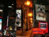 Mon chien PARLE!!!!!! Nominé pour Os d'or à Cannes