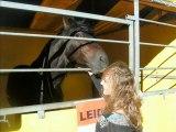 Foire aux chevaux du Luc en Provence