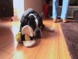 Pet Weight Loss Program Fights Growing Trend of Pet Obesity