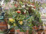 les fleurs de mon balcon
