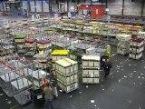 Aalsmeer : vie du marché aux fleurs 1