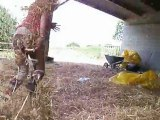 petage de cable au centre equestre