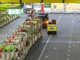 Aalsmeer : vie du marché aux fleurs 8