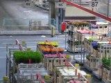 Aalsmeer : vie du marché aux fleurs 9