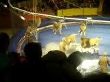Quand les animaux de cirque se révoltent...