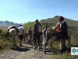 Les Accompagnateurs en Montagne (rando ânes de bât)