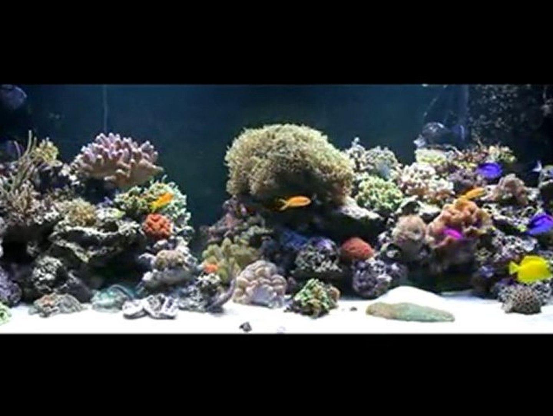 Fond Ecran Aquarium 2