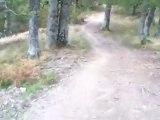Film depuis la descente de la forêt de hêtres