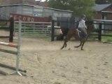 Sport Ponies Stable - JUMENT 11 ANS SANS PAPIER