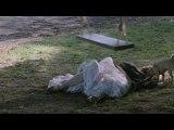 ŚLUBY PANIEŃSKIE Halloween trailer