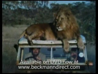 Funny lions from Born Free reunited with Bill Travers