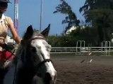 17.10.10 - entrainement obstacle - Sarah Rebelle