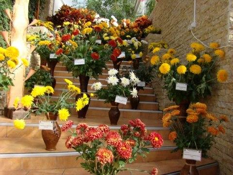 Expozitia de flori de toamna-Iasi