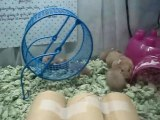 Mother Frankie & her baby dwarf hamsters #2