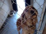 Hornell Animal Shelter video #1 - dogs and puppies