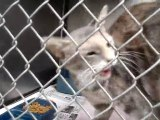 Hornell Animal Shelter #7 - cats kittens