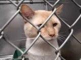 Hornell Animal Shelter 8 - cats eyes