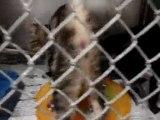Hornell Animal Shelter 9 - kittens climb gate